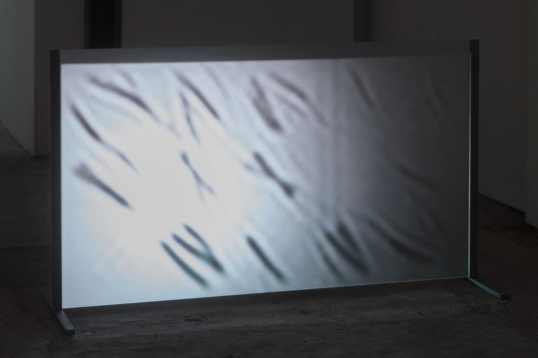 Michele Spanghero, Translucide, 2009-2017, video, sound, loop