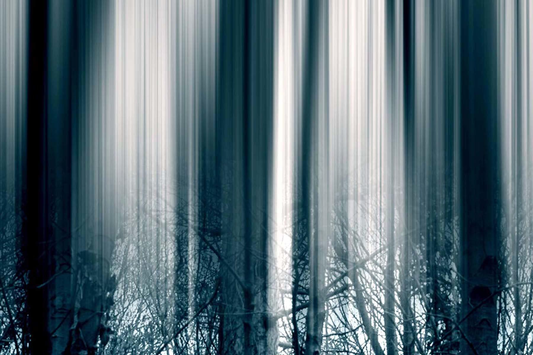 G. Dell'Antonia, I miei infiniti alberi (Castello), 2014, print on paper, 22 x 32 cm