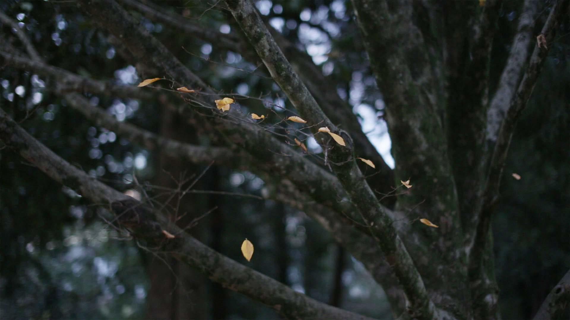 Elisabetta Di Sopra, Dipendenza sensibile, 2016, video tre canali, colore, suono, 3'05''
