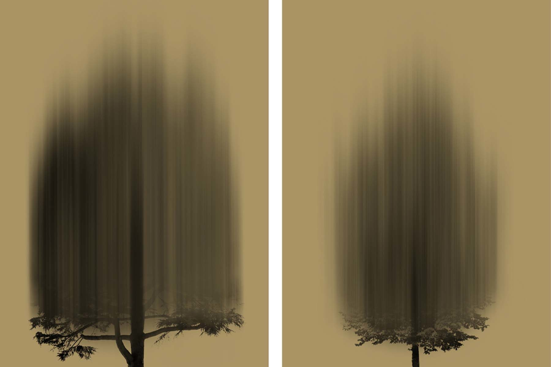 G. Dell'Antonia, I miei infiniti Alberi, 2014, print on wood, wax, graphite, each 35 x 25 cm
