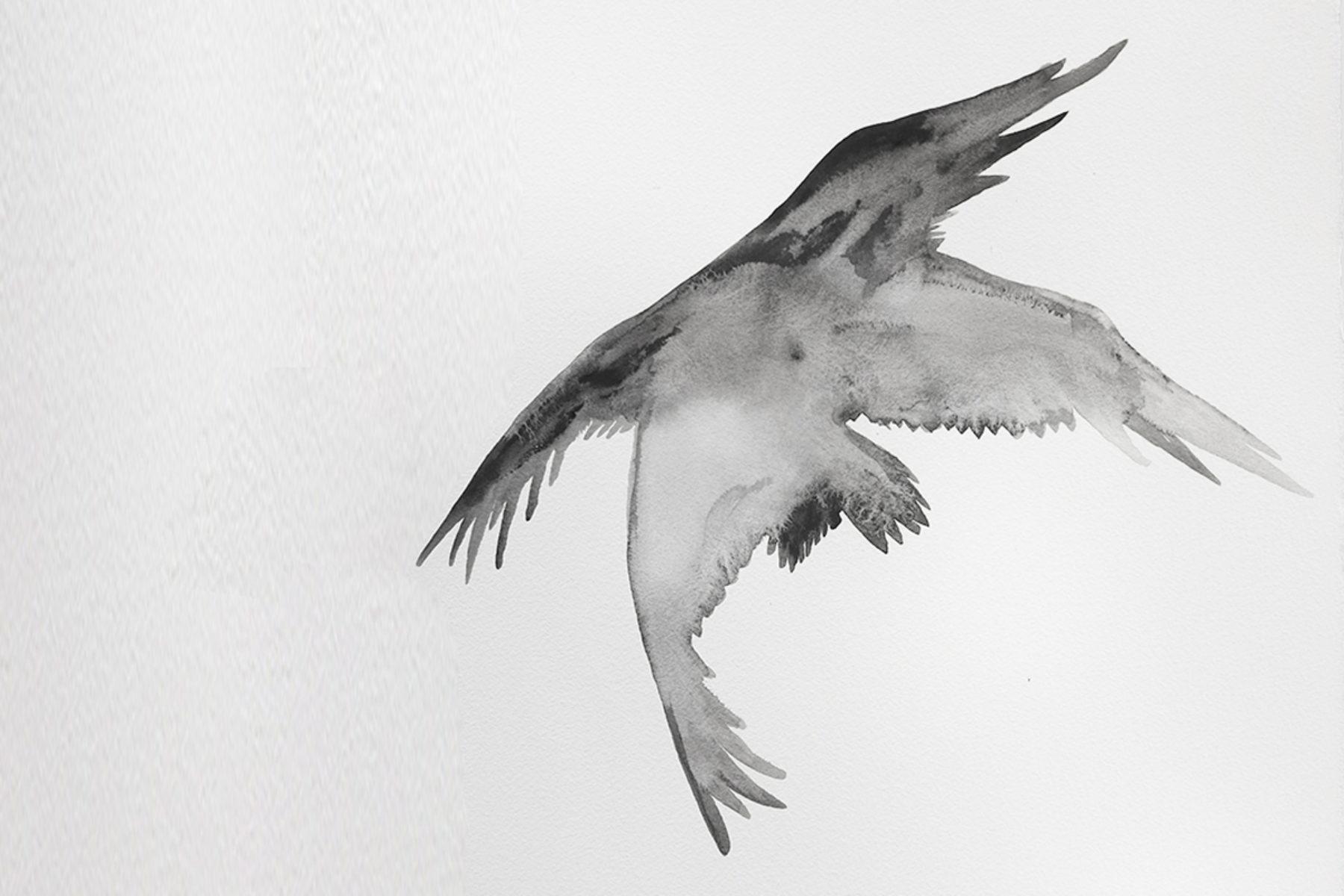 F. Lanaro, An eagle has not flag, 2013, acrylic on paper, 70 x 50 cm